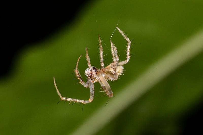 jul 07 7026 white spider