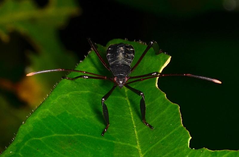 jul 07 7049 black beetle