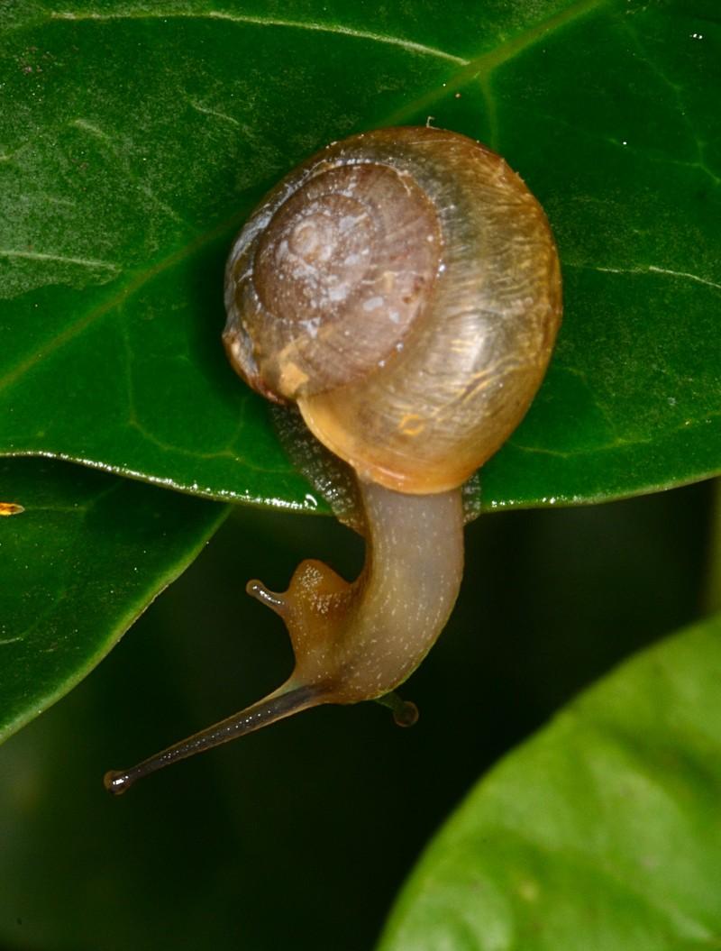 jul 07 7074 snail looking