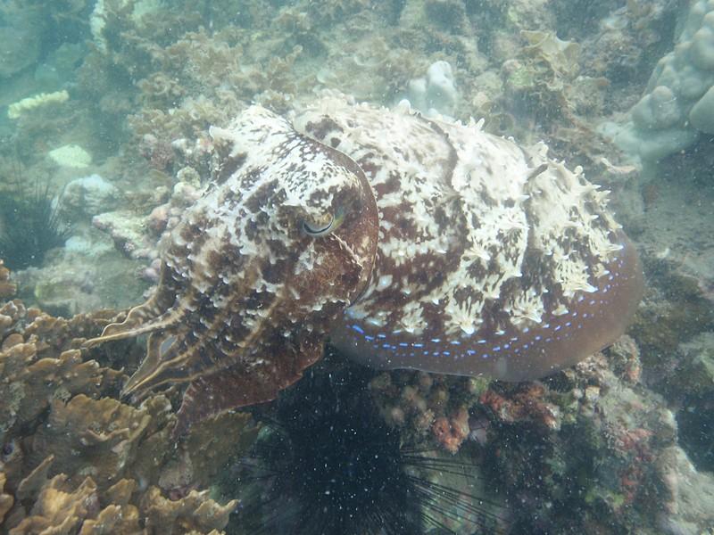 jul 09 2604 cuttlefish
