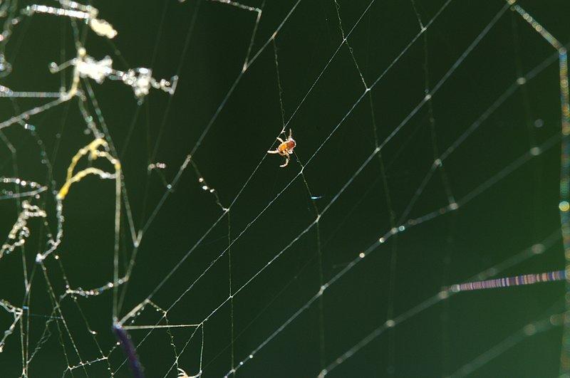 jul 12 1183 spiderling
