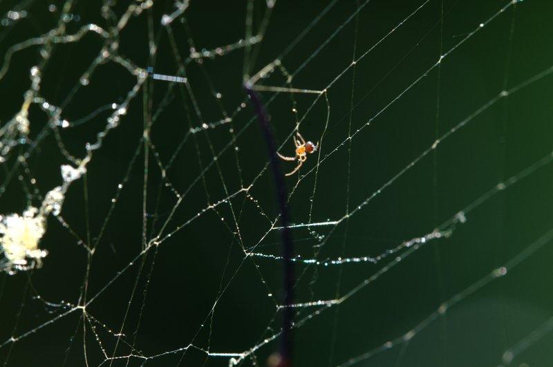 jul 12 1184 spiderlngs
