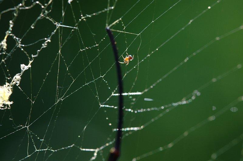 jul 12 1185 spiderling nephila leg
