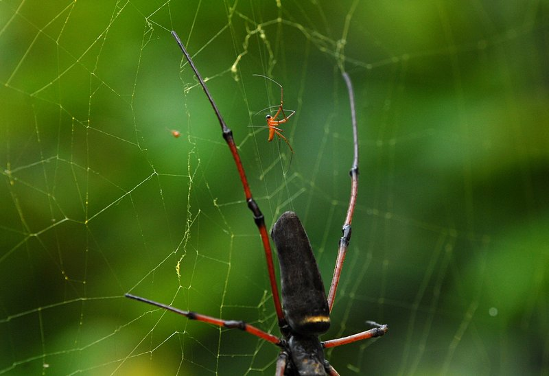 jul 14 2345 male nephila escape