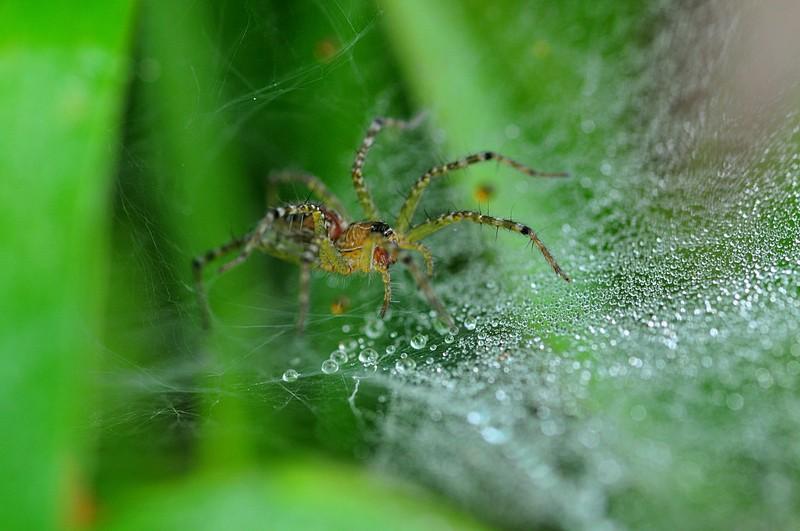 jul 24 8843 funnel web spider