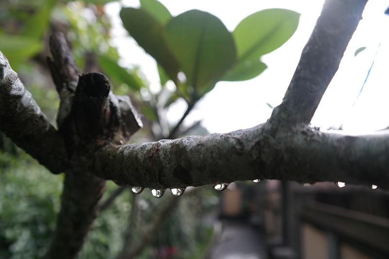 jul 25 1202 morning rain