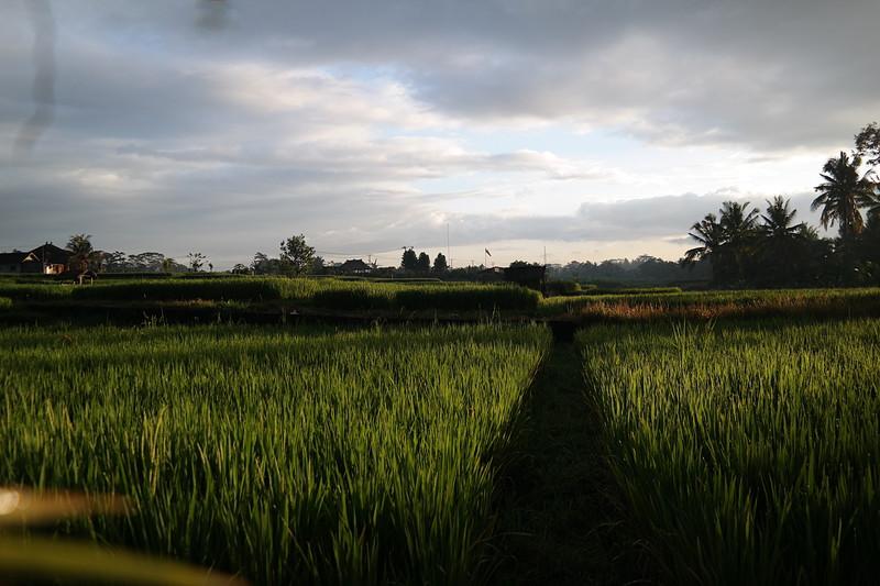 jul 25 1215 morning rice