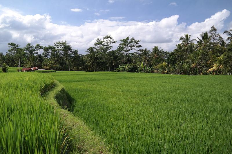 jul 25 1393 rice fields