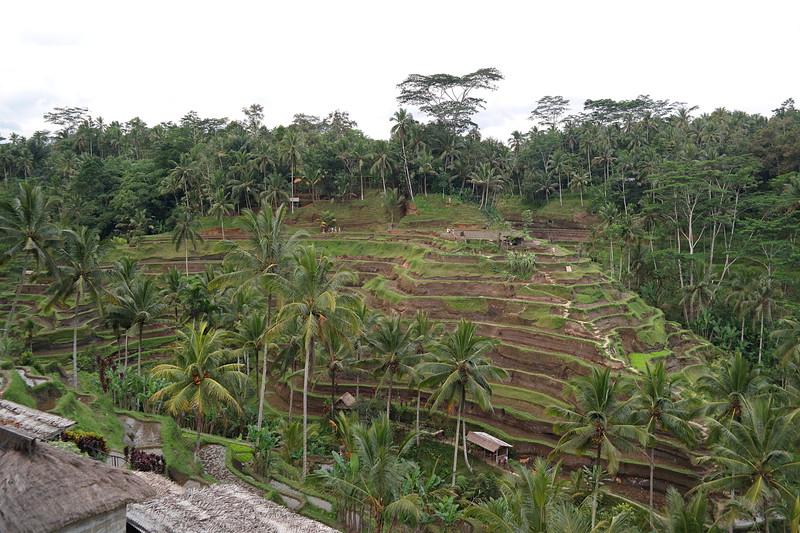 jul 25 1444 rice terrace