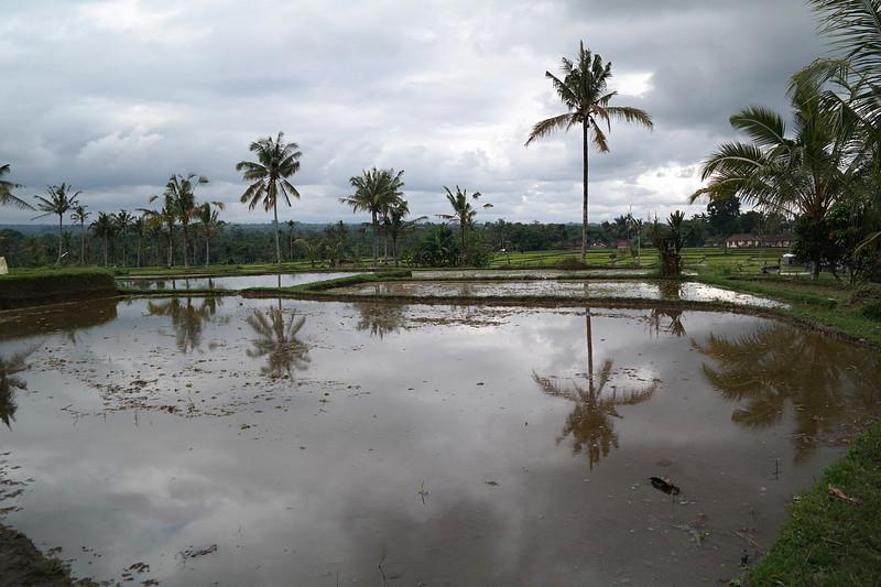 jul 25 1487 palm reflections