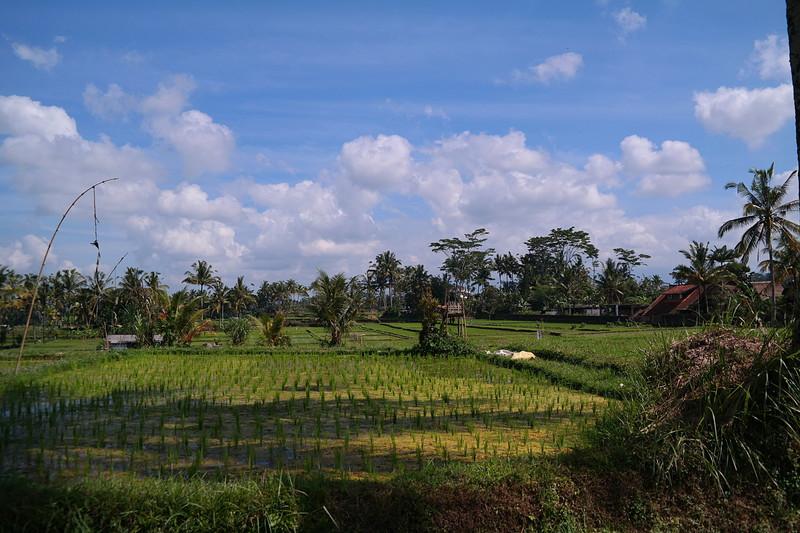 jul 27 1828 rice fields