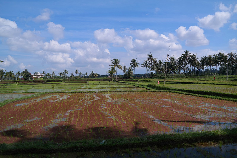 jul 27 1832 new rice