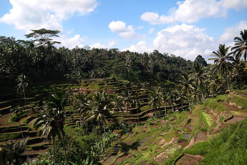 jul 27 1835 rice terrace