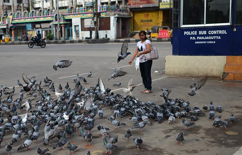 jul 27 2246 feeding pigeons