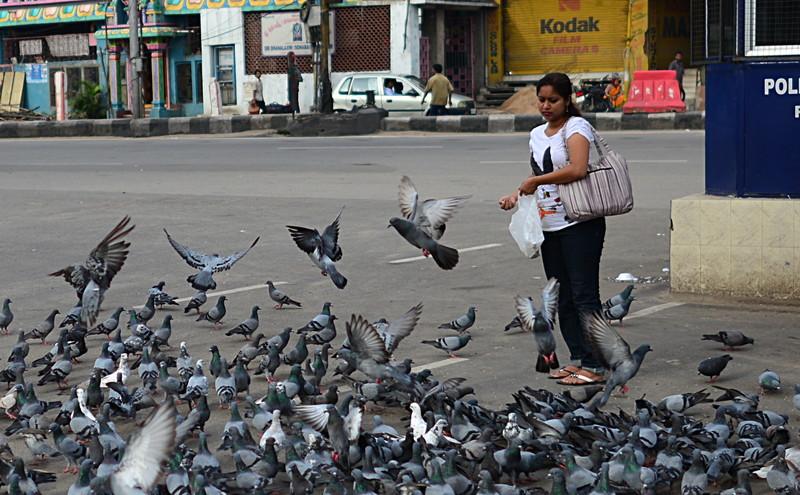 jul 27 2248 feeding pigeons