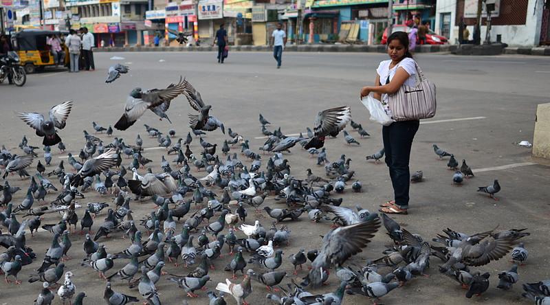 jul 27 2253 feeding pigeons