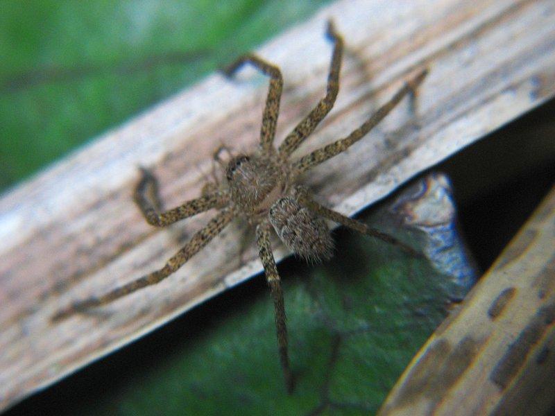 jul 27 4865 ground spider