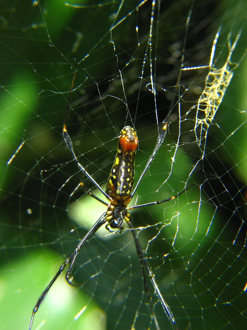jul 28 5342 young nephila