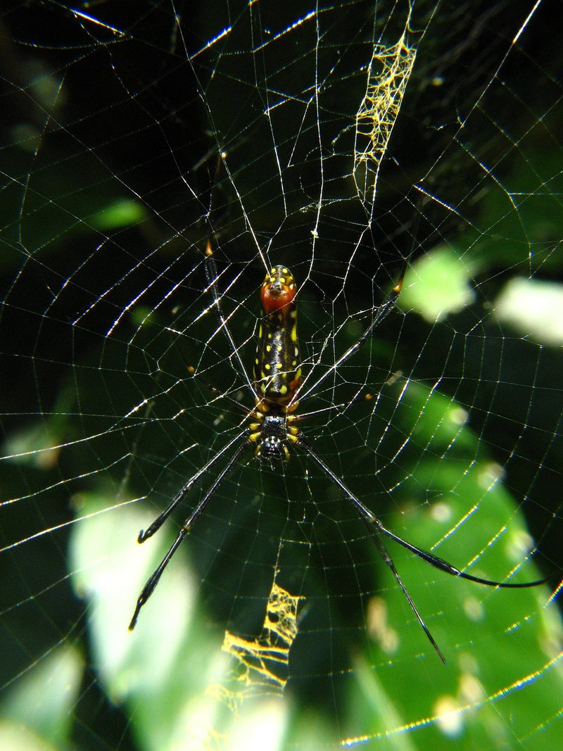 jul 28 5383 nephila decorations