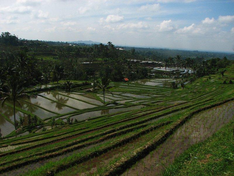 jul 28 5801 rice field