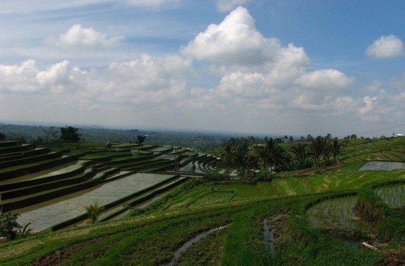 jul 28 5818 rice fields clouds