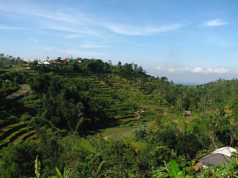 jul 29 5766 rice fields