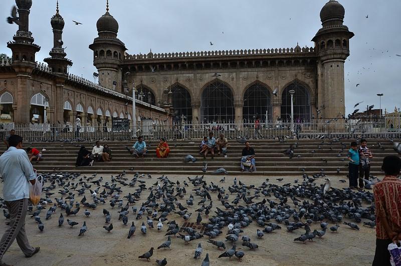 jul 31 2274 charminar pigeons