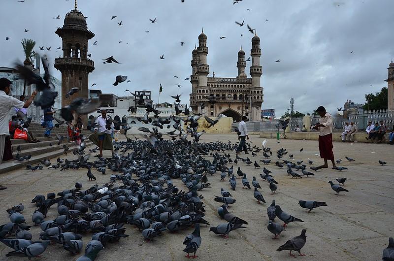 jul 31 2364 pigeons