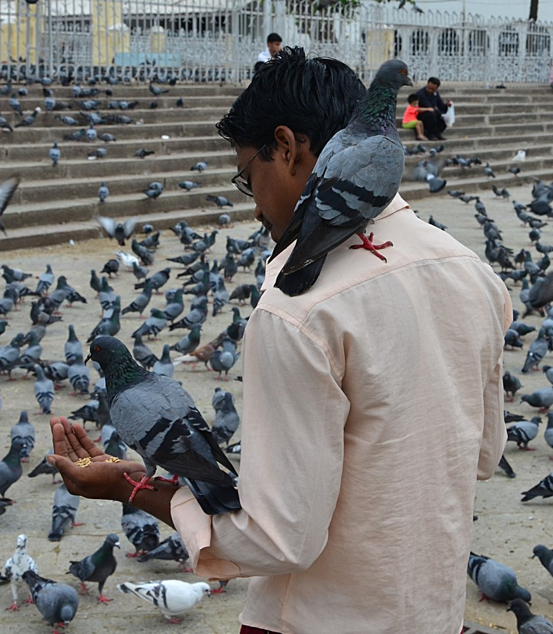 jul 31 2391 pigeon man
