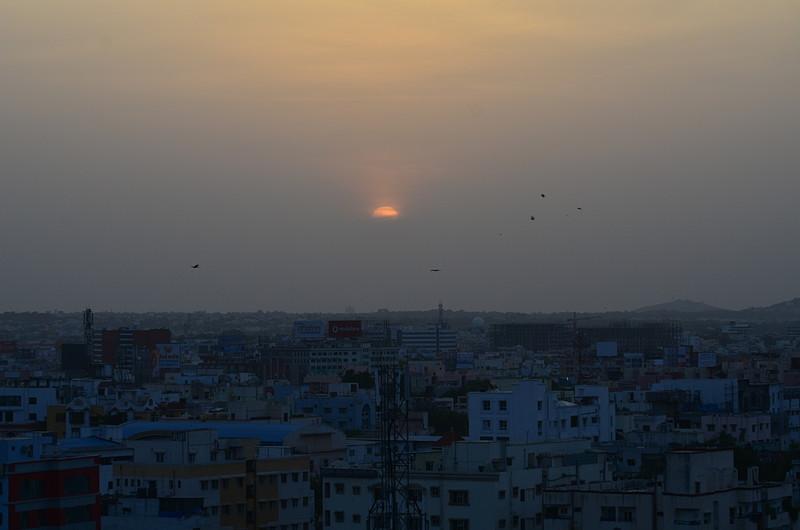 jun 03 4199 sun birds