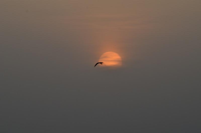 jun 03 4210 sunbird