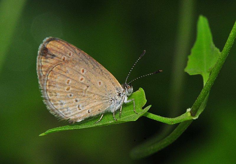 jun 06 7273 moth eyes