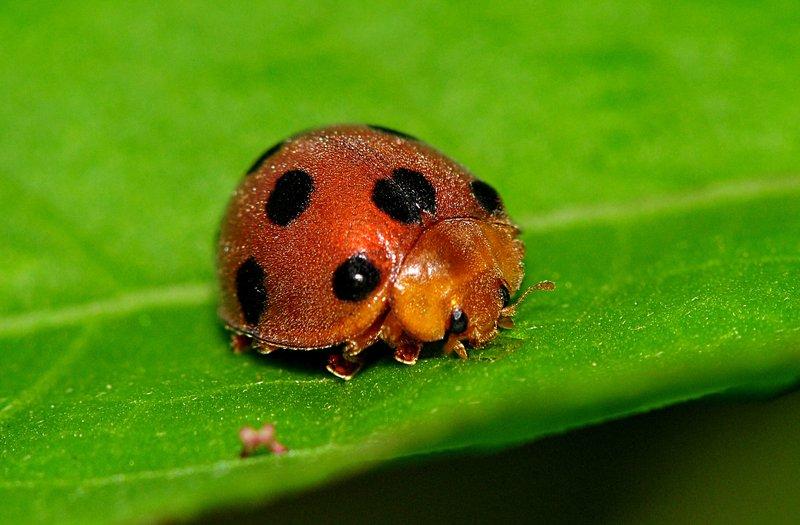 jun 06 7279 lady bug