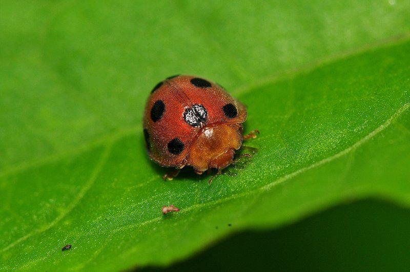 jun 06 7292 lady bug