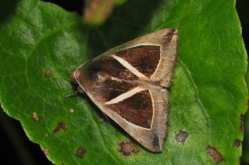 jun 06 7301 moth