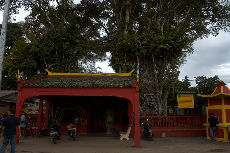 jun 08 4683 banyon tree temple