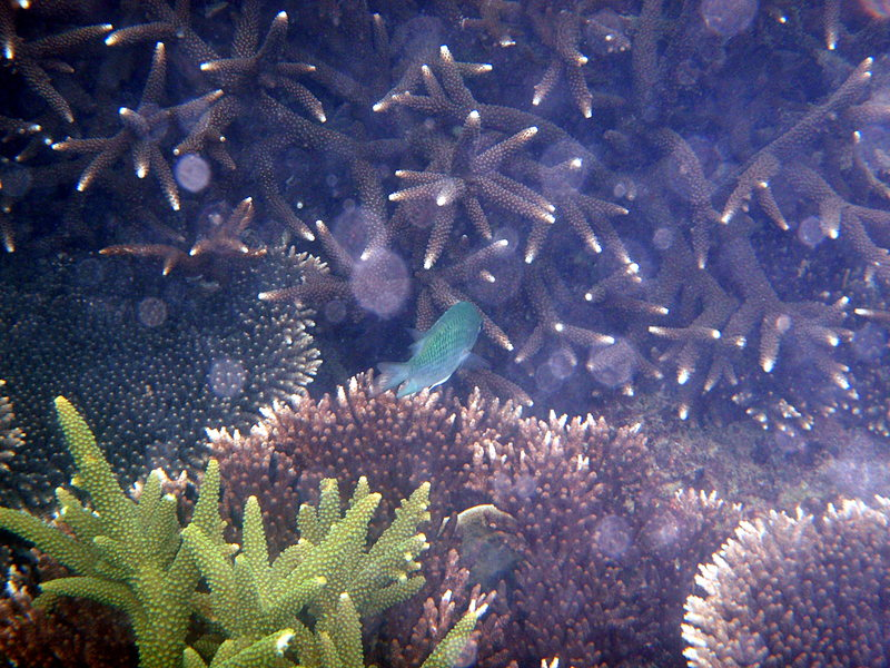 jun 09 0762 coral