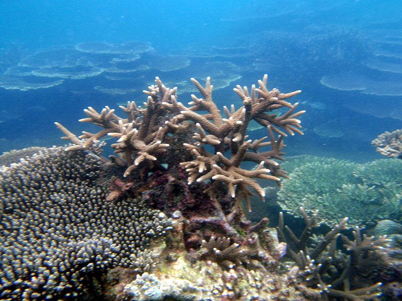 jun 09 0793 seascape