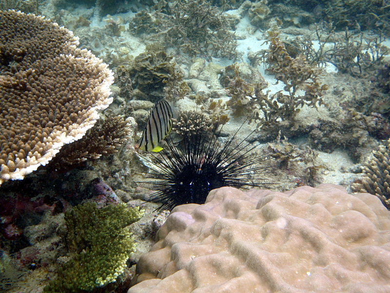 jun 09 0838 coral fish