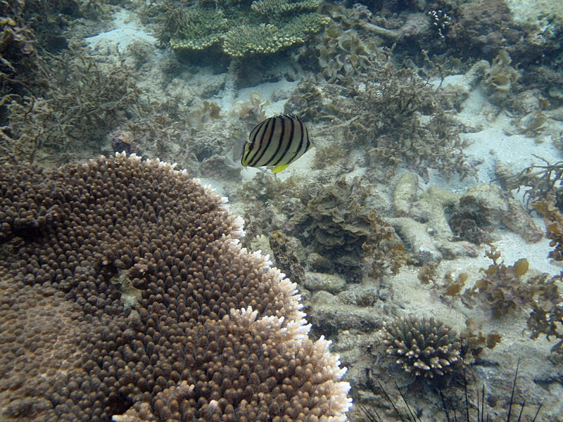coral fish essay The worldwide decline in coral cover has serious implications for the health of coral reefs but what is the future of reef fish assemblages marine reserves can.
