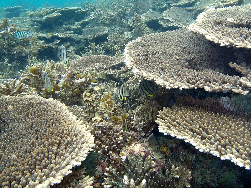 jun 09 0843 coral fish