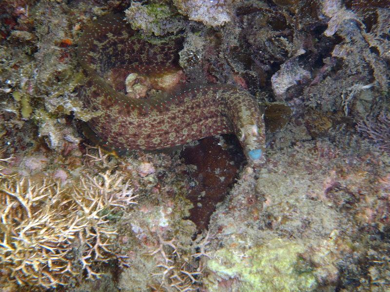 jun 09 0853 eel face