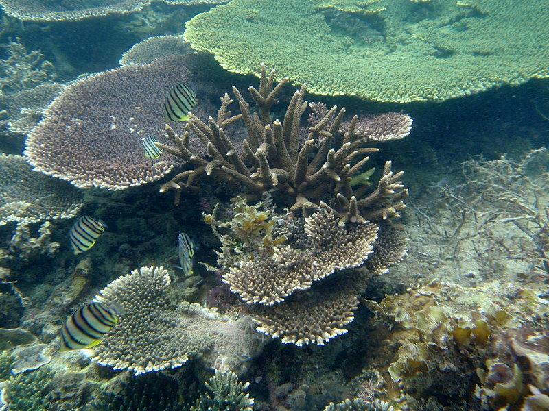 jun 09 0933 coral fish