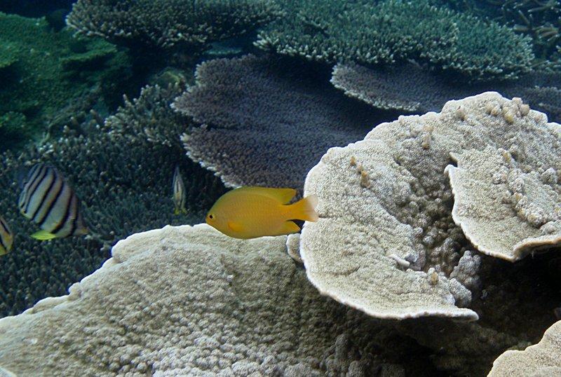 jun 09 0958 yellow fish