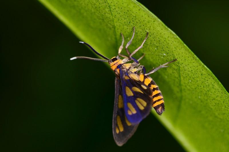 jun 09 5736 tiger moth