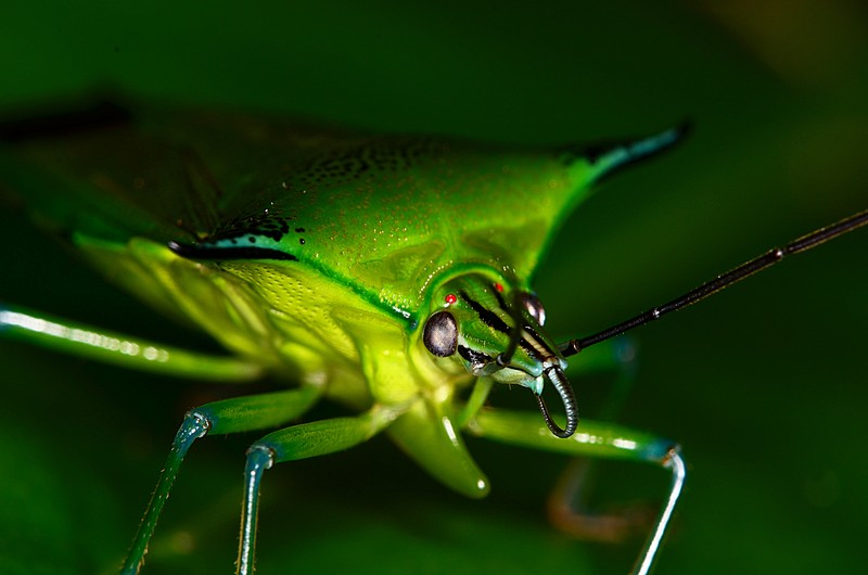 jun 09 5737 shield bug face