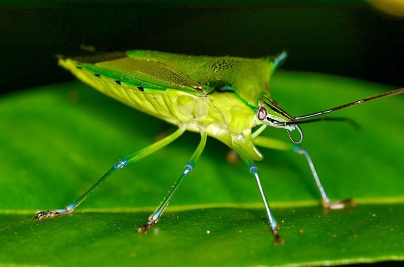 jun 09 5741 shield bug