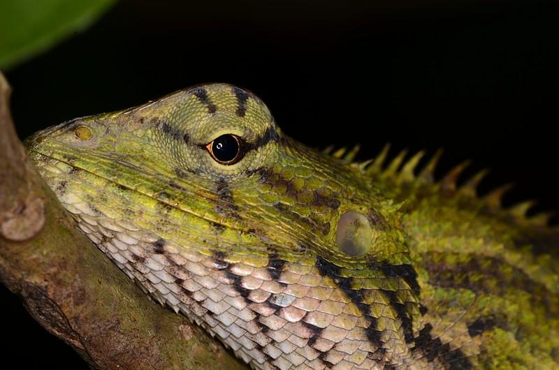 jun 09 5742 lizard eye