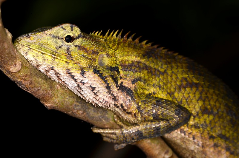 jun 09 5746 lizard face