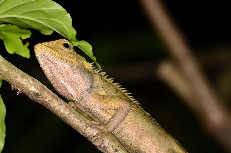 jun 09 5760 lizard